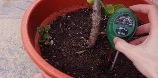 Que importancia tiene el EC y PH en el cultiv o de plantas de interior