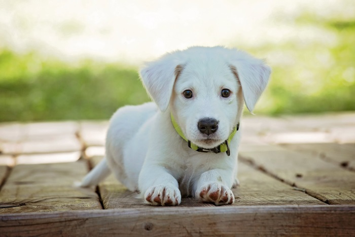 la importancia de llevar a nuestras mascotas al veterinario